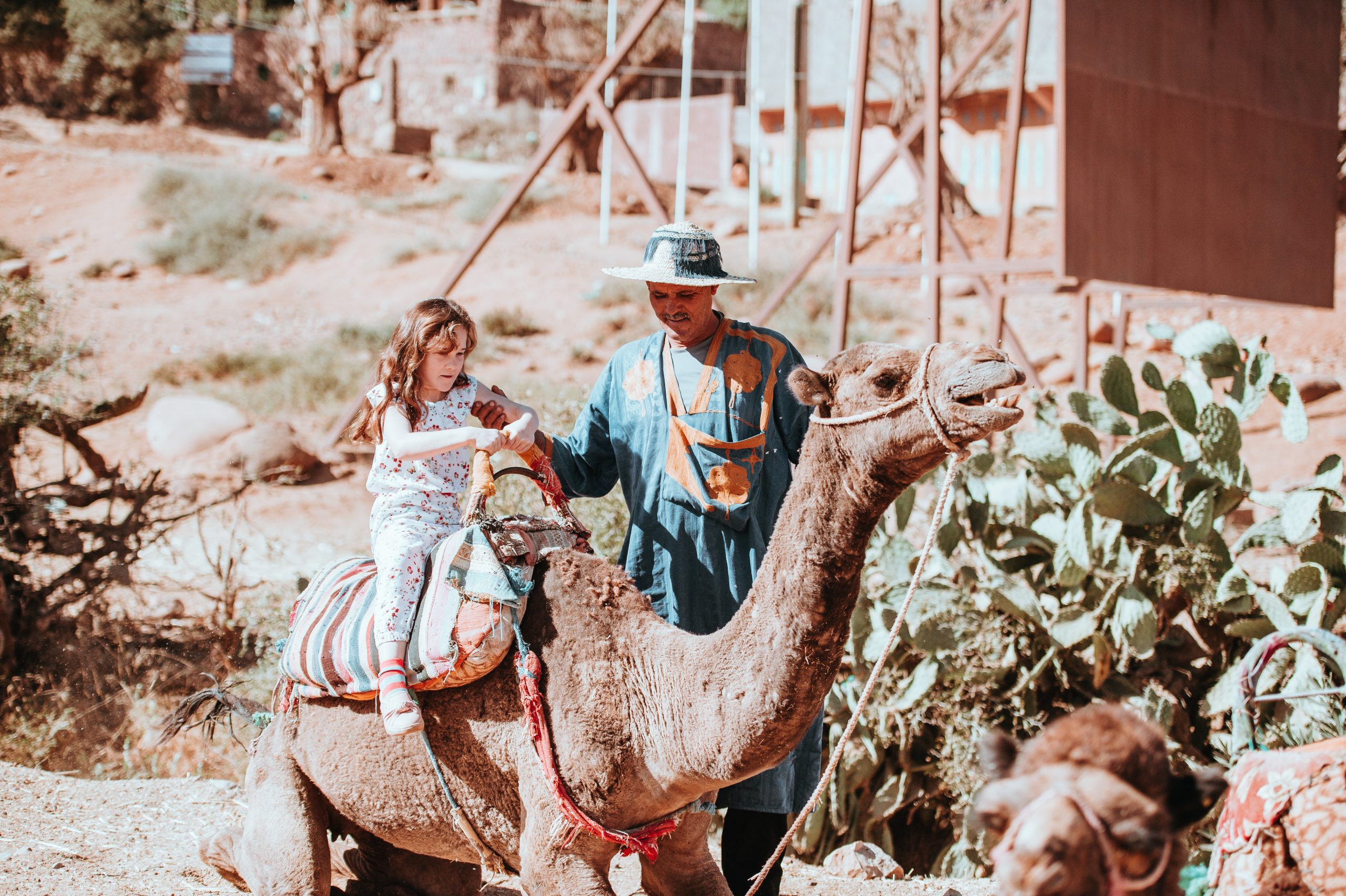 gallery image for Private Camel Ride in The Palm Groove Marrakech