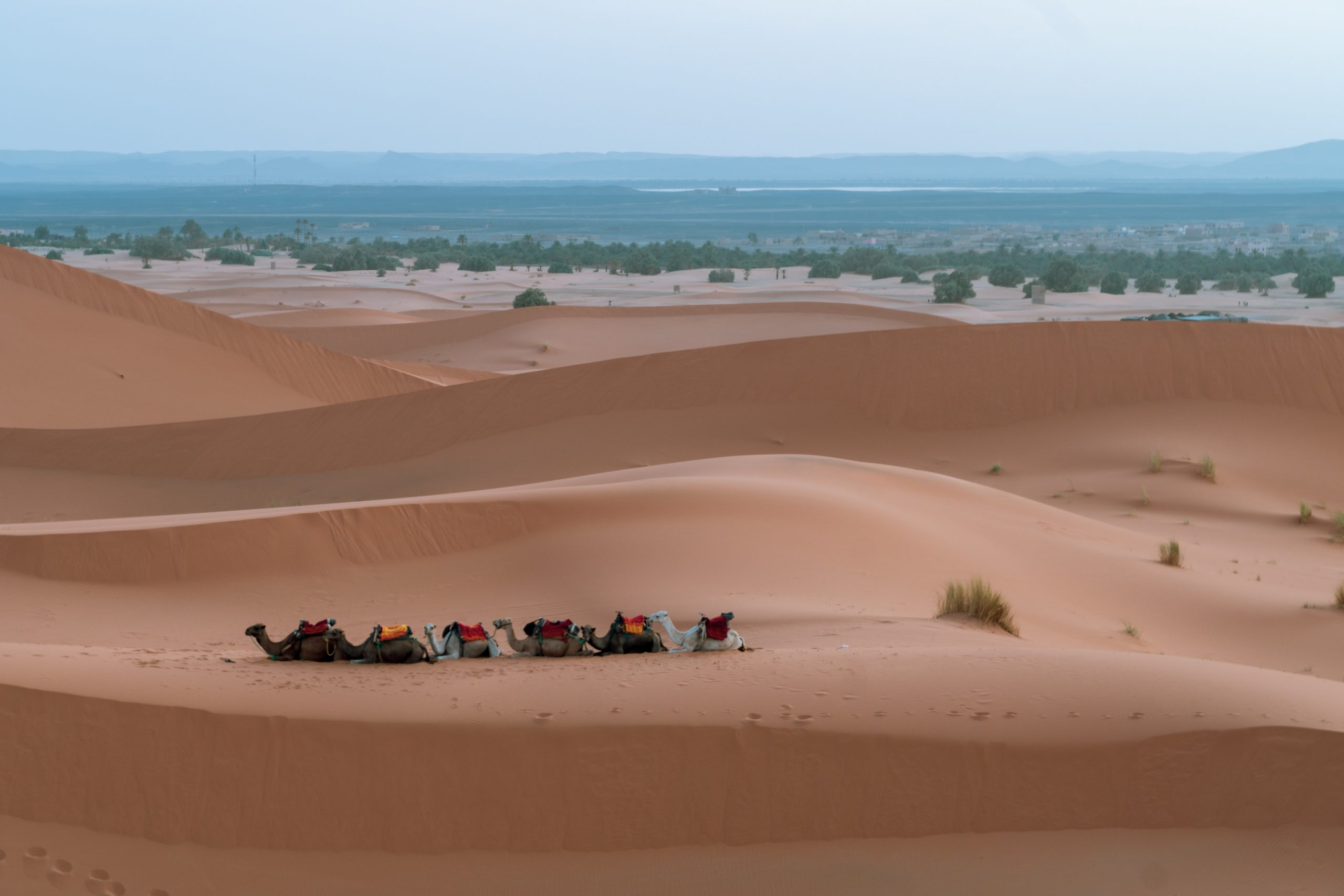 gallery image for Highlights of Morocco