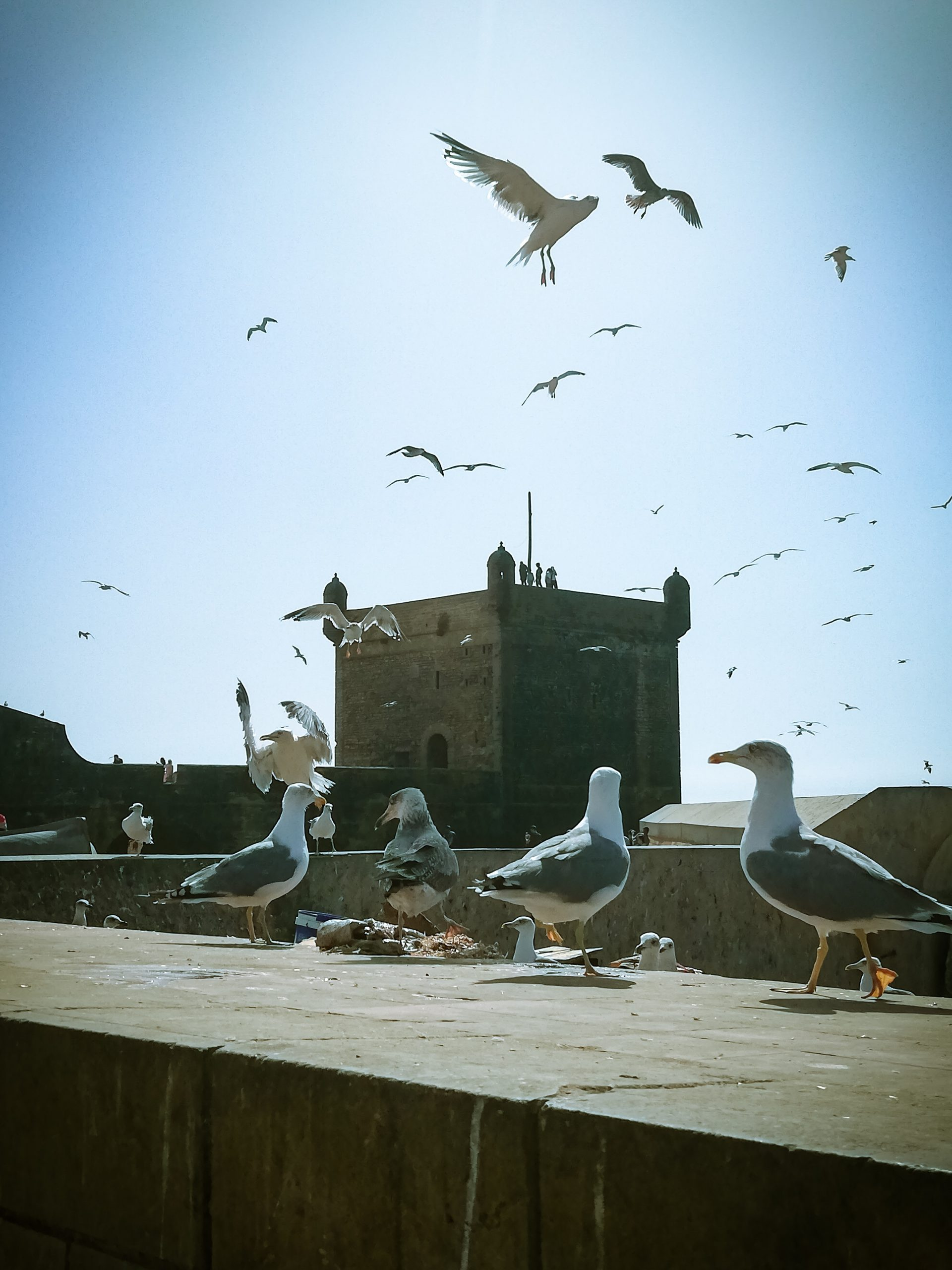 gallery image for Highlights Of Essaouira
