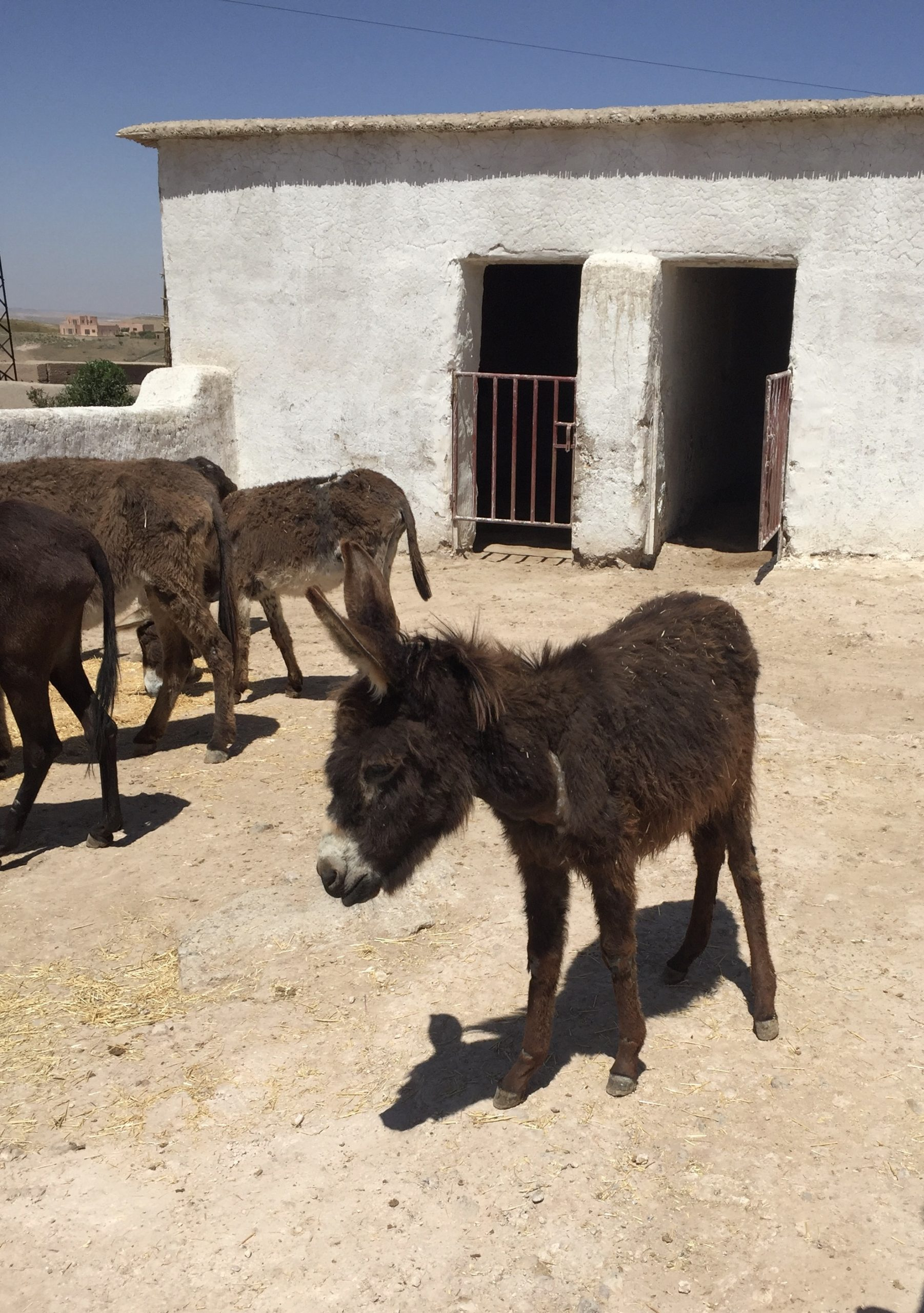 gallery image for Animal Friendly Morocco